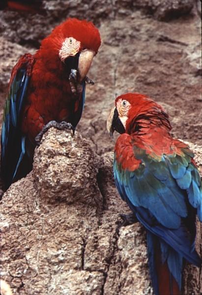 Viaja a través del Amazonas de Perú: Bosque tropical para viajeros