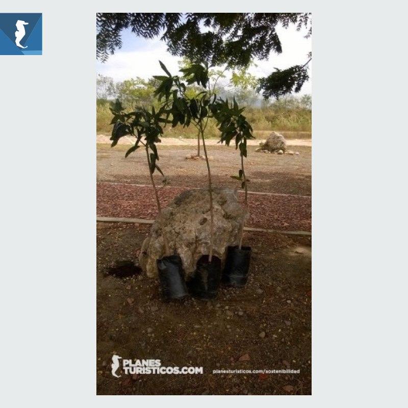 IMAGEN ARBOL DESTACADA.001 - PlanesTuristicos.com siembra sus dos primeros árboles