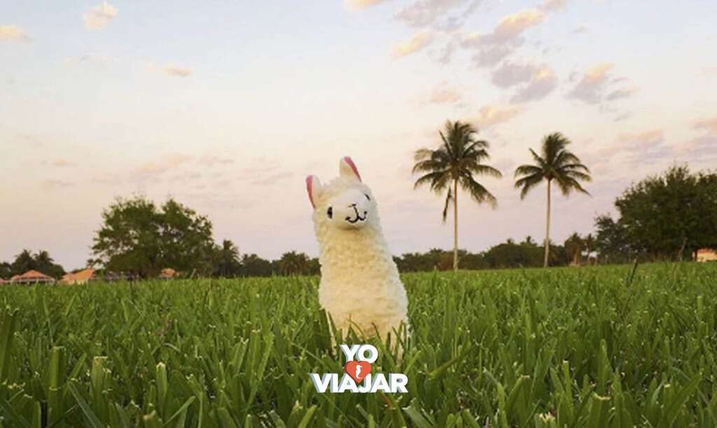"""YoAmoViajar Banner Links.002 - La cuenta de Instagram de la adorable """"Llama Sin Drama"""" está aquí para ayudar a liberarte del estrés"""