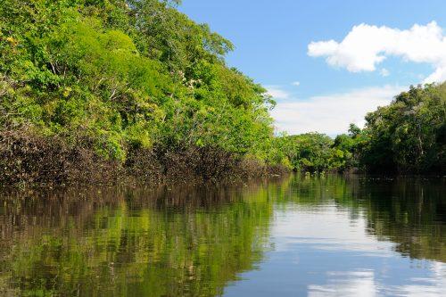Canva Amazon River Landscape In Colombia 500x333