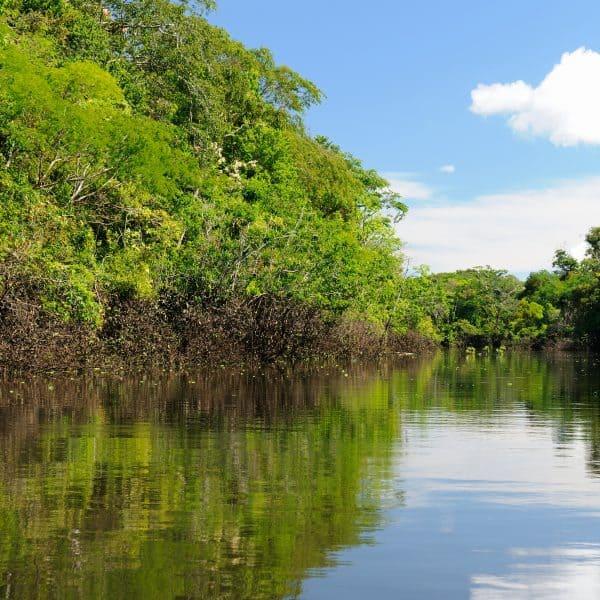 Amazonas - Hermoso Río Con Aguas Cristalinas Y Mucha Vegetación Verde