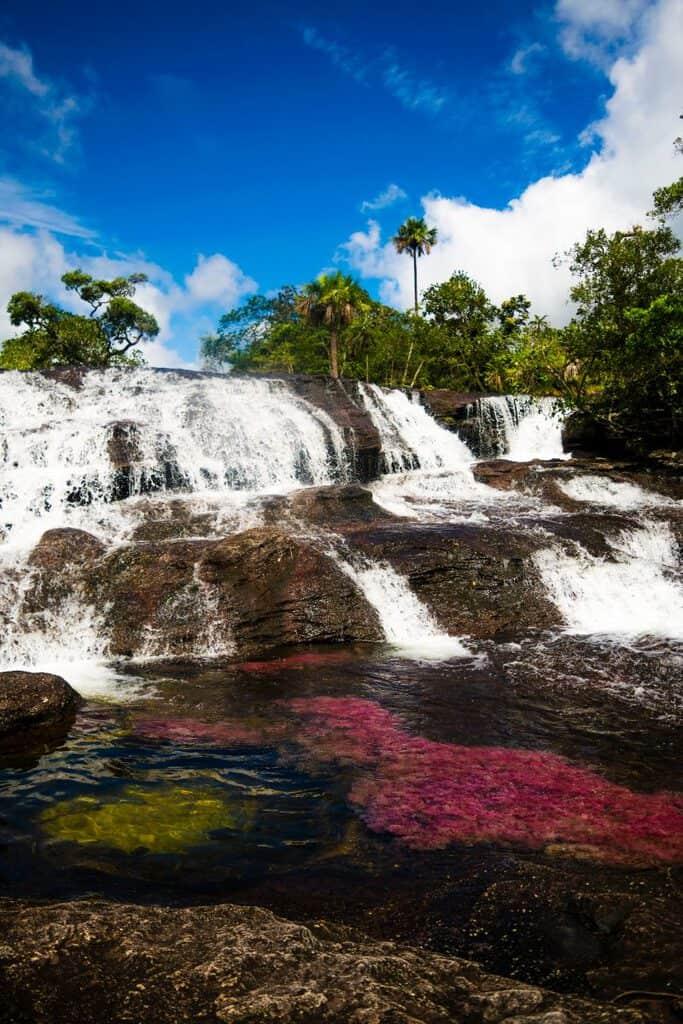 Canva CAÑO CRISTALES 2 800x1200 - 20 lugares que no te puedes perder en Colombia.
