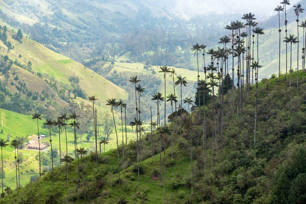 Canva Wax Palm Trees 1200x801 - 20 lugares que no te puedes perder en Colombia.