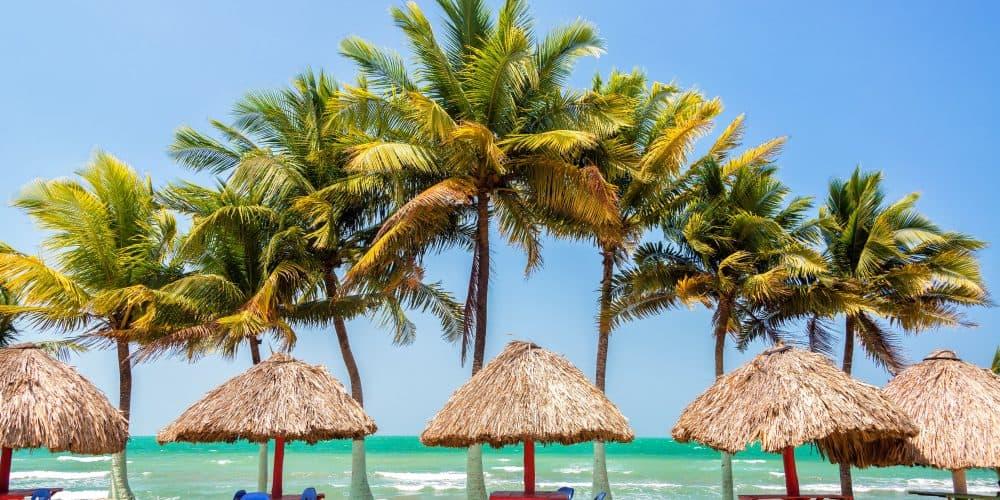 Palm Trees And Sea Pfn6Ae4 1 Min - Oferta Santa Marta · Con Vuelo Directo