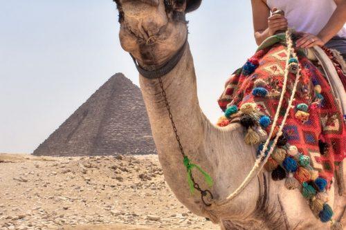 Hombre Egipto Camello Planesturisticos.com - Planes Turísticos